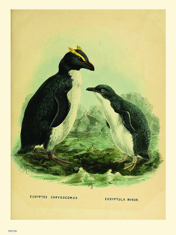 Penguins Natural History 30x40cm Art Poster Print