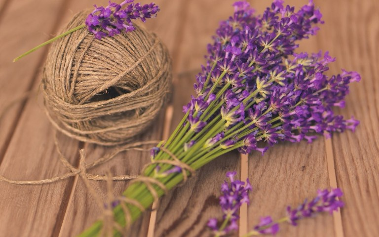 Lavender Benefits You Will Surely Love