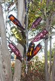 Hang 'Em High Bottle Tree
