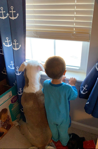 Boy and dog look out the window with Anchor Room Darkening Window Curtains