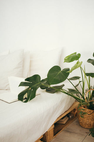 Add house plants to your home