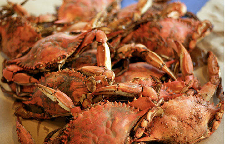 Steamed FEMALE Hard Crabs - Fresh!