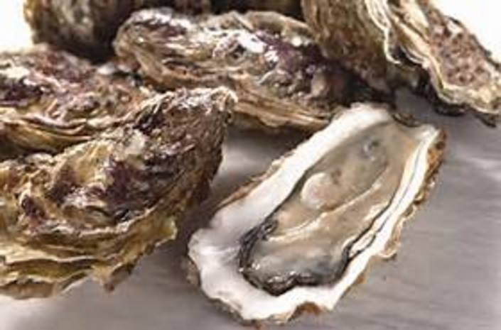 Oysters In The Shell - Fresh