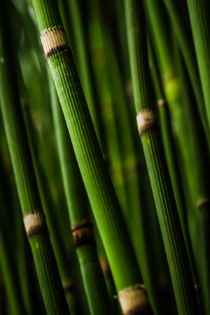 3 Reasons Why You Should Use Bamboo!