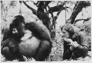 Our Partner Inspiration - The Dian Fossey Gorilla Fund International