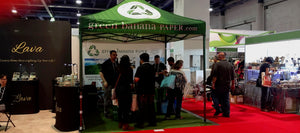 Green Banana Paper Wins 'Best in Show' at Las Vegas ASD Market Week