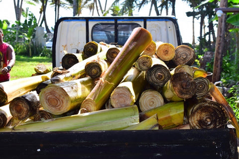 truckload of banana trees