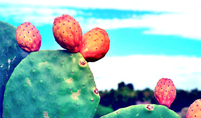 Prickly Pear Seed Oil, Your Next Skincare Obsession