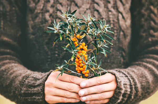 Grown in the Himalayas, sea buckthorn benefits your skin with vitamins and nutrients