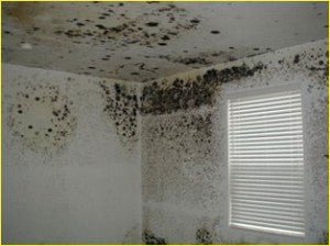 Insulation causing mould