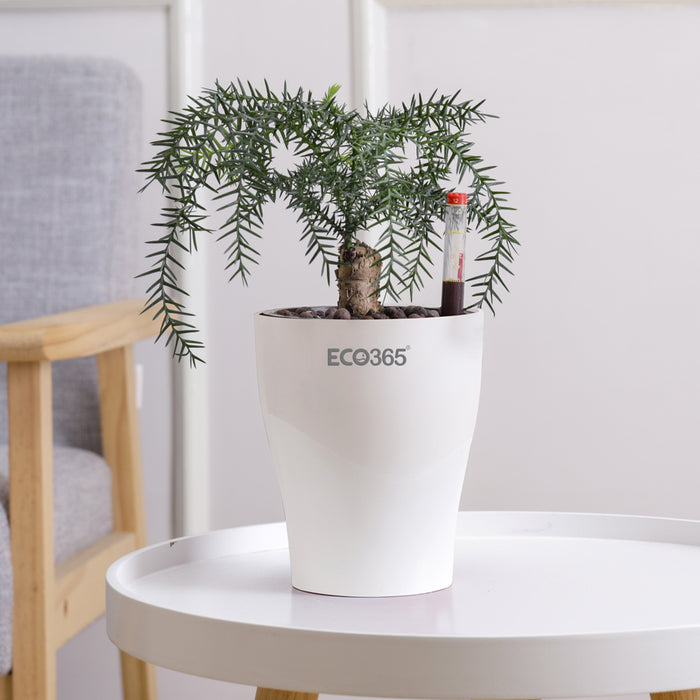 ECO365 Self Watering Pot With Water Level Indicator.