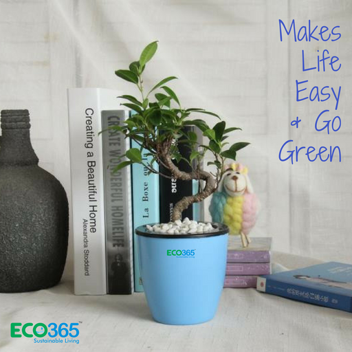 Self-Watering Pots Pack of 6 - Eco365