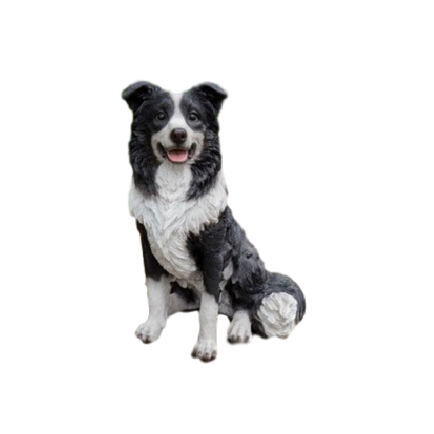 Border collie assis