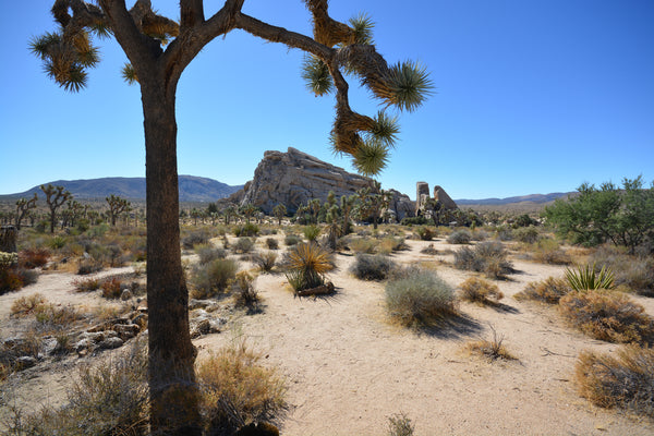 JoshuaTree - DesertInn2022
