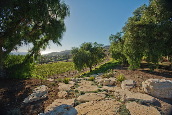 Ranch - RA3079 - Vineyard Land