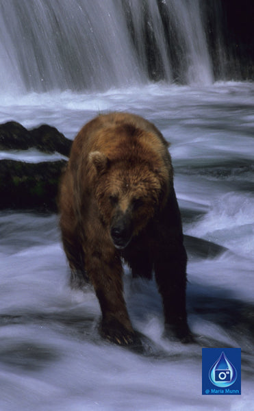 Wildlife Visions - Whales, Dolphins, Brown Bears and more ....