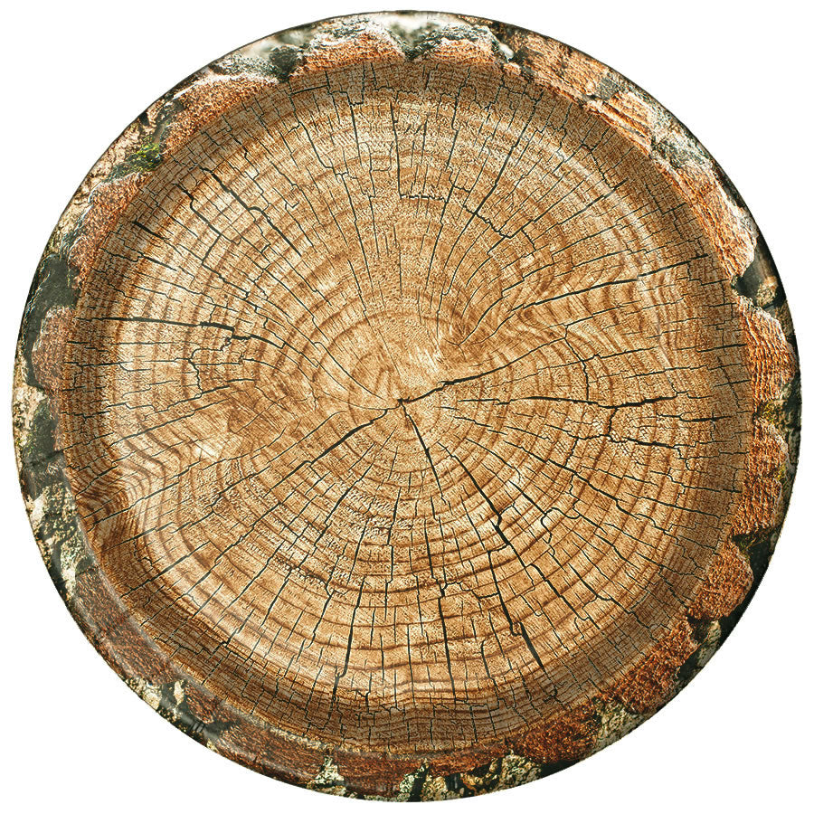 Rustic Cut Timber Dinner Plates 10 Inches 8 Pack Party