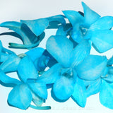 Loose bloom orchid edible flowers - candy color
