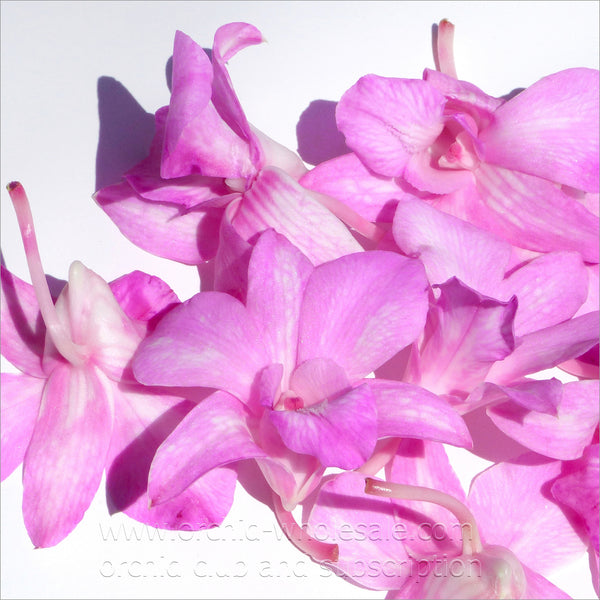 Loose bloom orchid edible flowers - pink