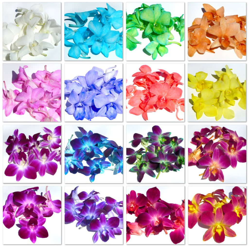 Assortment Loose bloom orchid edible flowers 16 COLORS