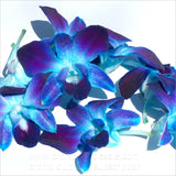 Loose bloom orchid edible flowers - blue purple sonia