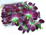 Loose bloom orchid edible flowers - green purple sonia