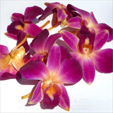 Loose bloom orchid edible flowers - orange purple sonia