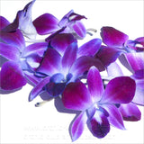 Loose bloom orchid edible flowers - purple sonia
