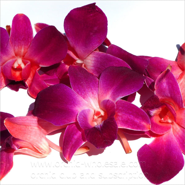 Loose bloom orchid edible flowers - red purple sonia