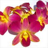 Loose bloom orchid edible flowers - yellow purple sonia