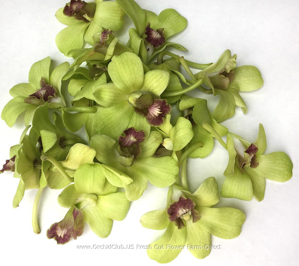 Loose bloom orchid flowers - Jade green