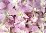 Loose bloom orchid flowers - Light levender