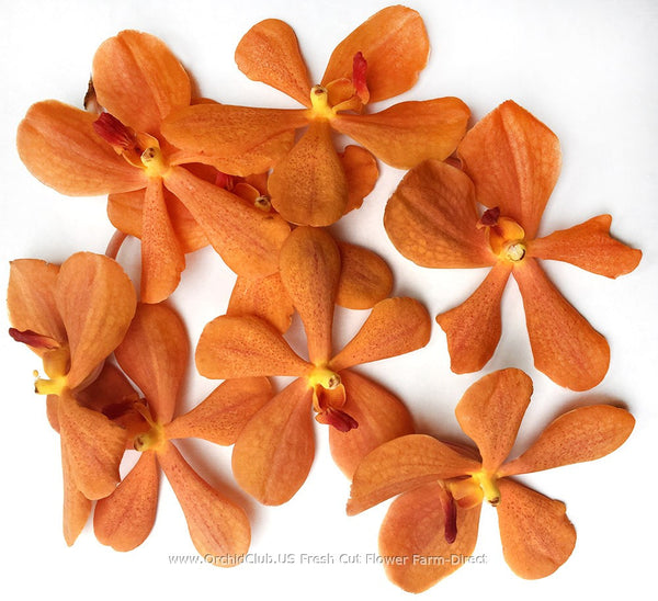 Loose bloom orchid flowers - mokara orange