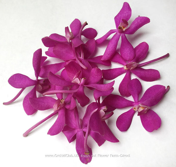 Loose bloom orchid flowers - mokara pink