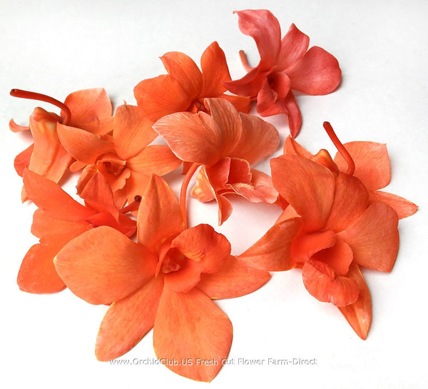 Loose bloom orchid edible flowers - orange