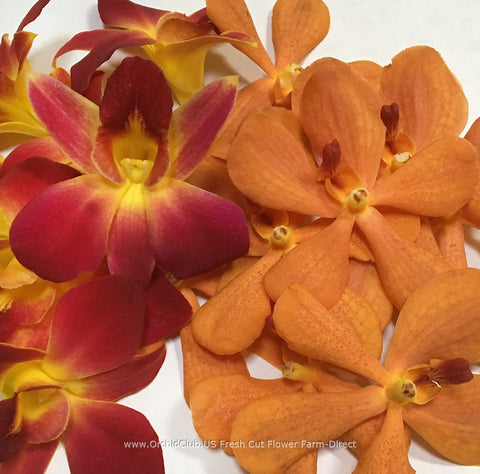 Assortment Loose bloom orchid flowers - DUO orange mokara yellow sonia