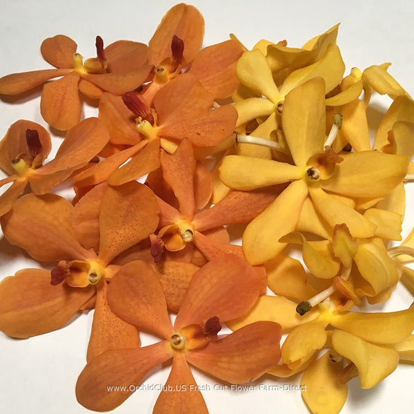 Loose bloom orchid flowers - mokara orange yellow