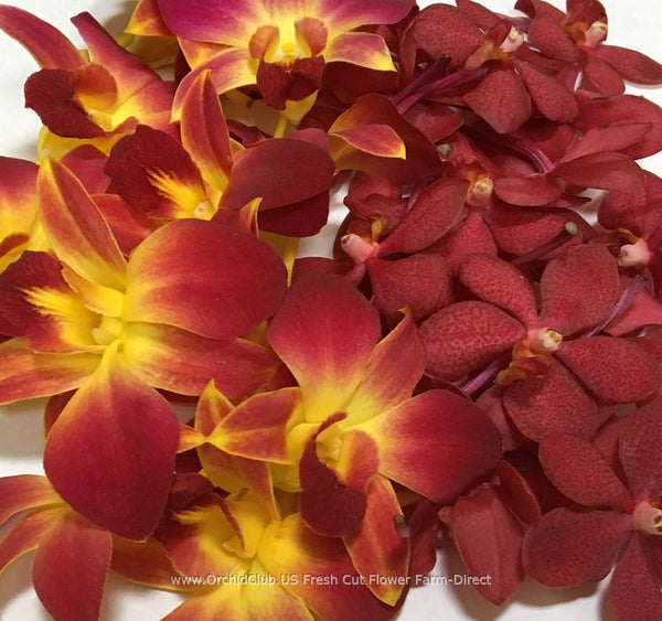 Loose bloom orchid edible flowers - red orchid