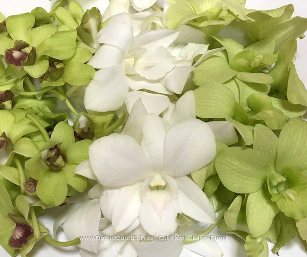 Assortment Loose bloom orchid flowers - TRIO green