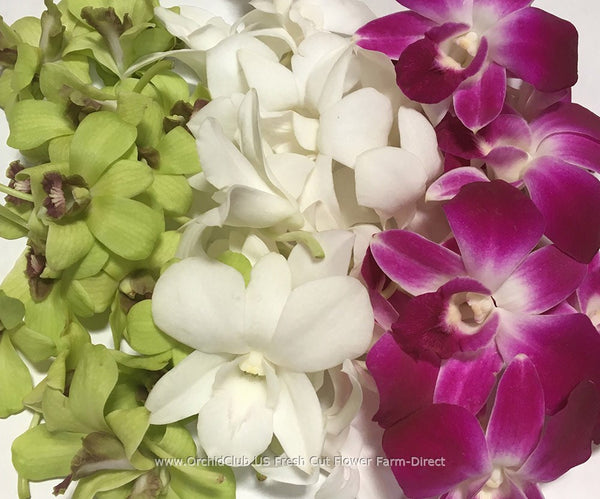 Assortment Loose bloom orchid flowers - TRIO classic