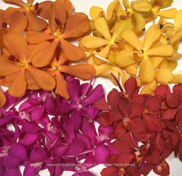 Loose bloom orchid edible flowers - assort colors
