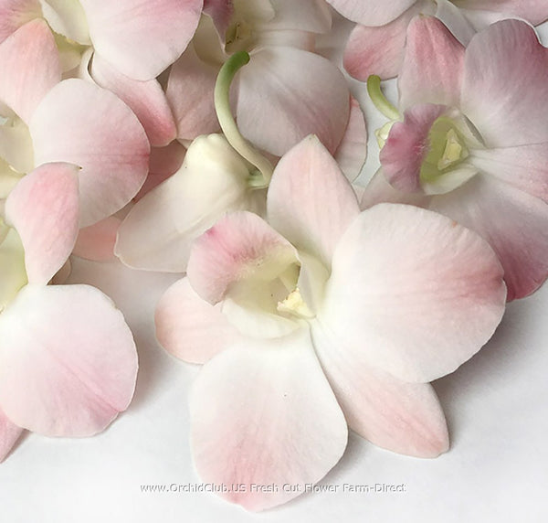 Loose bloom orchid edible flowers - peach color