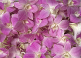 Loose bloom orchid edible flowers - pink color