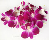 Loose bloom orchid flowers - DUO purple burgundy