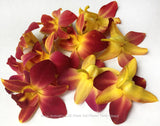 Loose bloom orchid flowers - TRIO yellow sonia mokara pink red