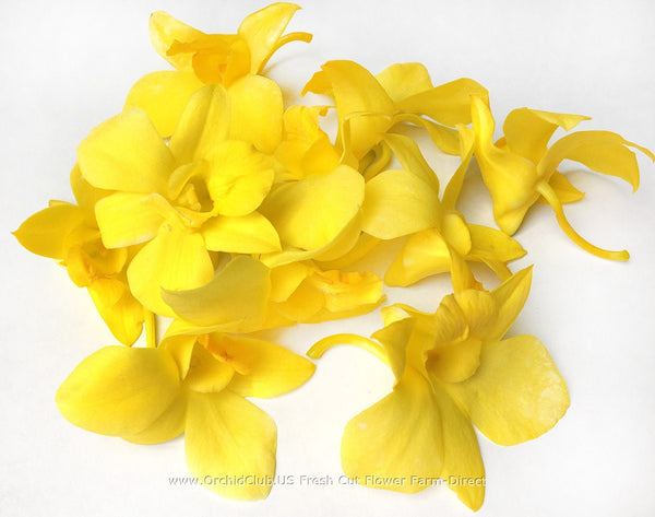 Loose bloom orchid edible flowers - yellow
