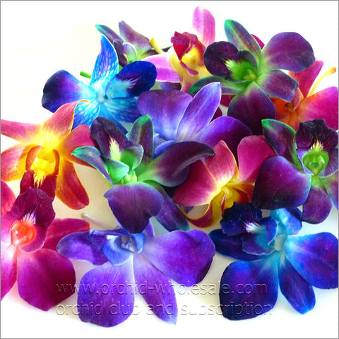 Assortment Loose bloom dyed orchid flowers 16 COLORS