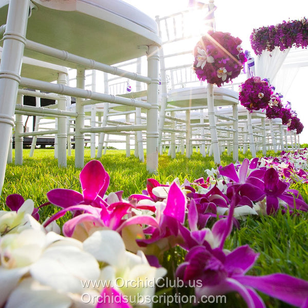 Loose bloom orchid edible flowers - white wedding