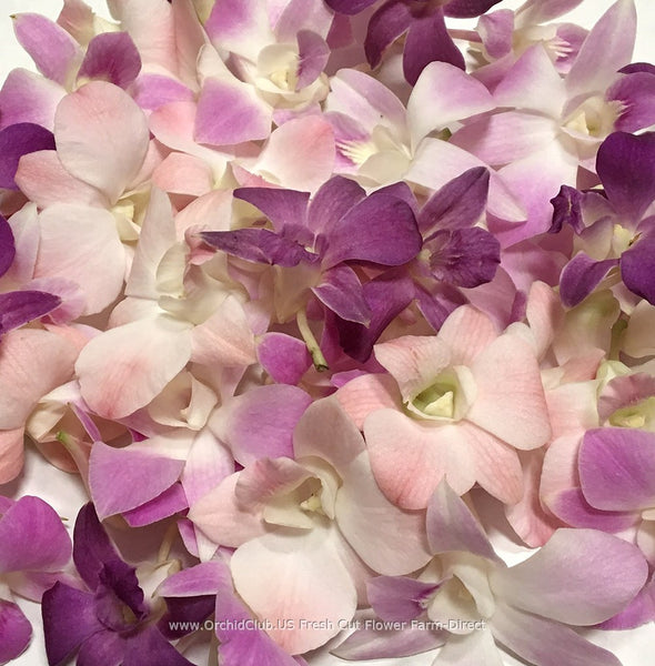 Assortment Loose bloom orchid flowers - 4 colors peach pink lavender purple