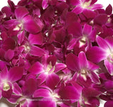 Loose bloom orchid edible flowers - purple and peach